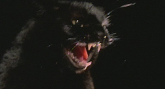 009-Black-Cat